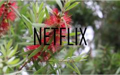 April Netflix Update